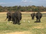 Sloni.JPG
